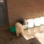 Bonny & Clyde (naughty puppies)