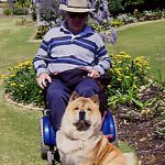 Orson - Official mascot for the Multiple Sclerosis Society in Perth